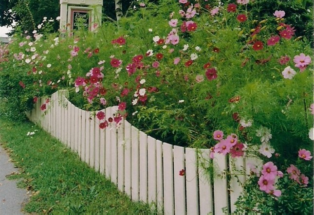 Picket-Fence-Flowers