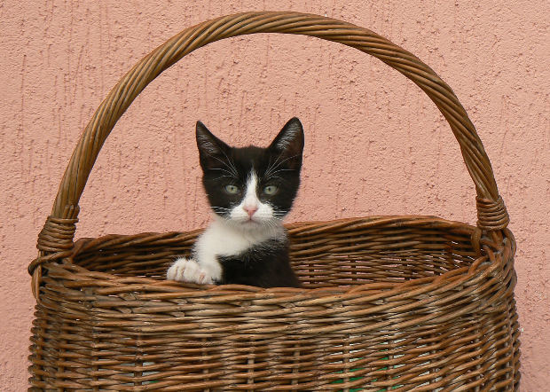 Cat-in-Basket