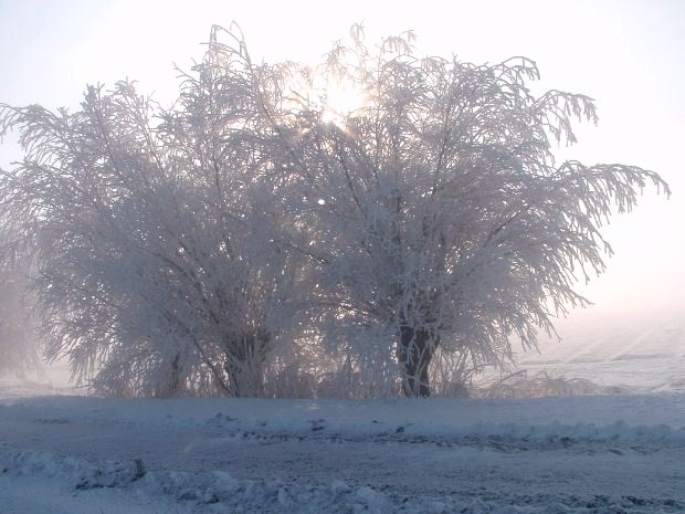 Ice-on-Trees